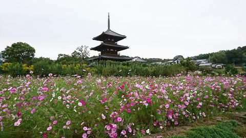 DSC_0174法起寺