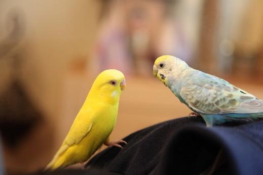 小鳥サミット005