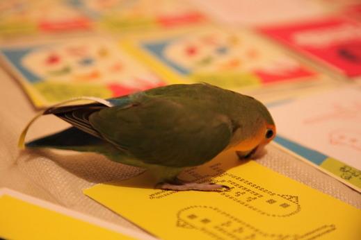 小鳥サミット003