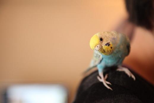 小鳥サミット001