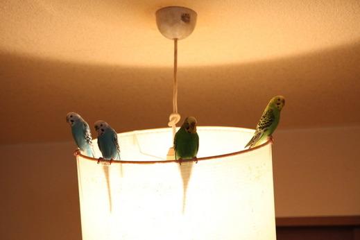小鳥サミット008