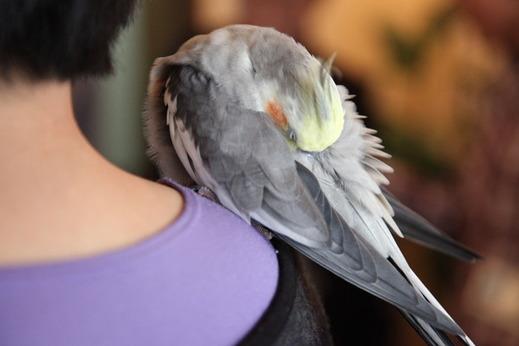 小鳥サミット002
