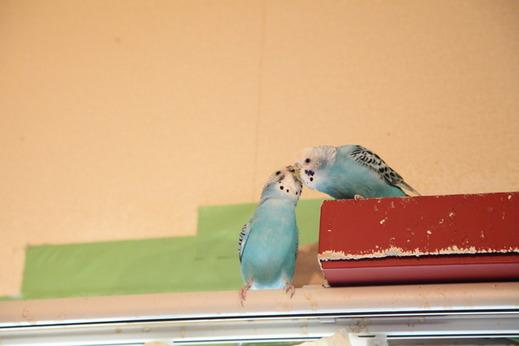 小鳥サミット007