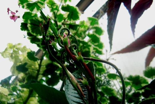 夏の花03