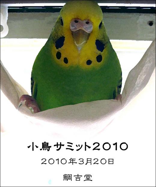 小鳥サミット