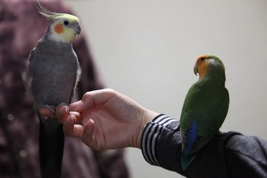 小鳥サミット009