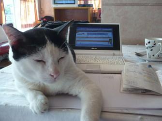 チェンライと猫とEeePC