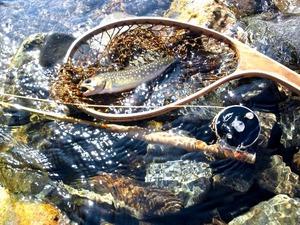 新緑の渓と岩魚