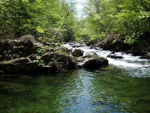 新緑の渓れ2