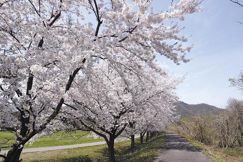 ◎春イメージ