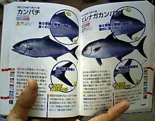 釣魚識別図鑑の見やすいページ!