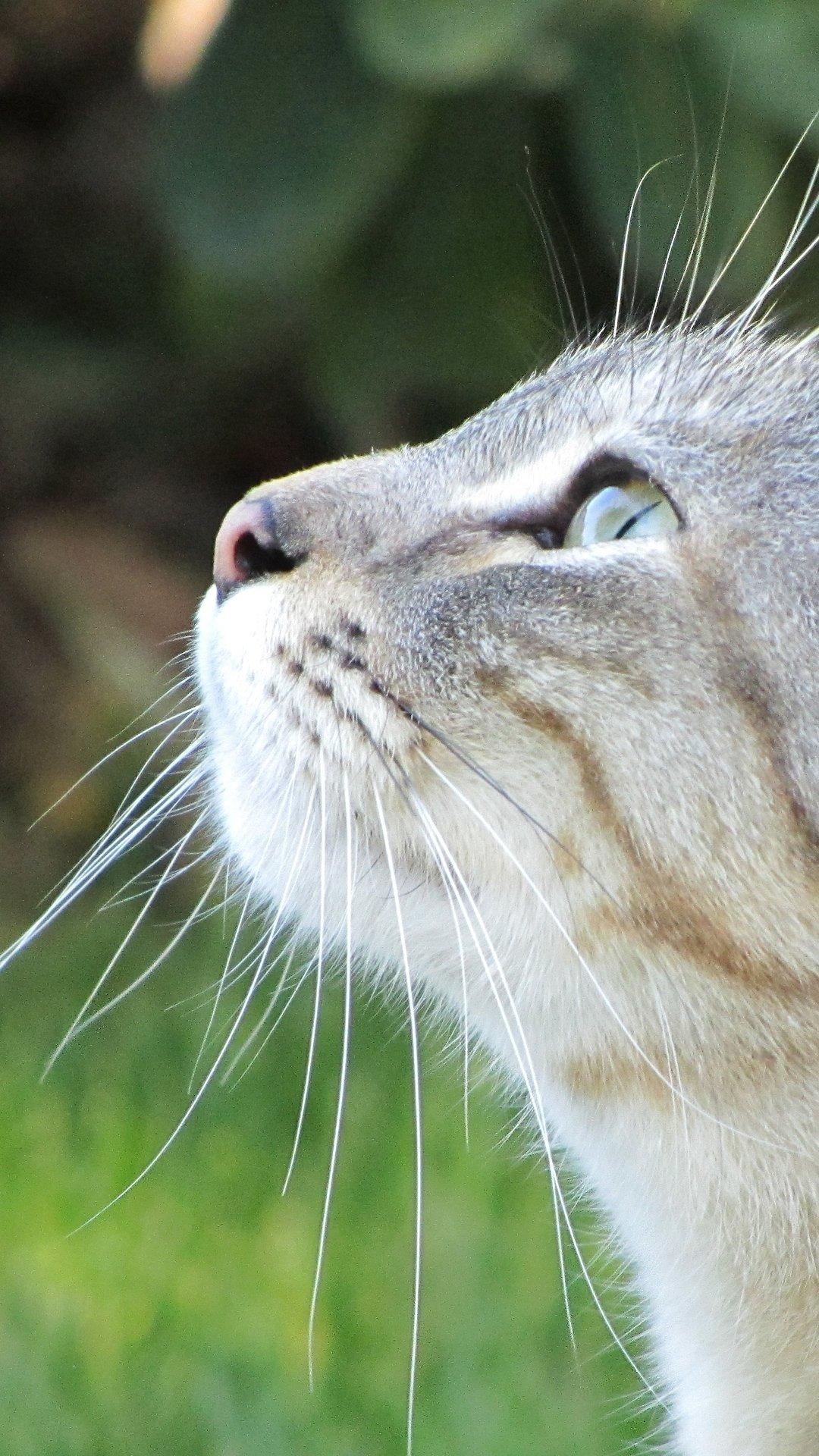 猫 25枚 スマホ壁紙 待受 19 1080 縦長フルhd Android Iphone スマホ壁紙 待ち受けブログ 仮 Android Iphone