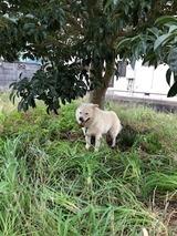 木の下を掘る
