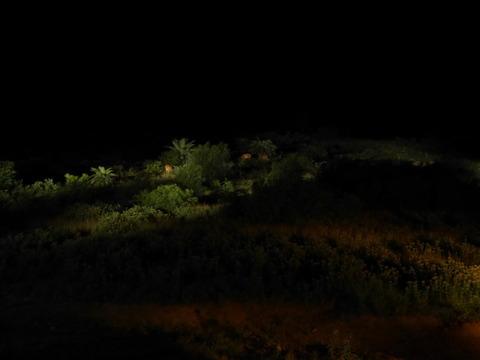 緑島の野生の鹿