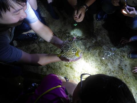 緑島の夜の探検