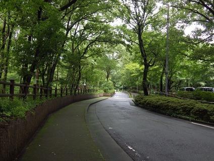 緑地入口①