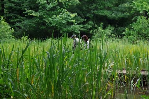 トンボ湿地①