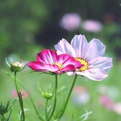 category_flower