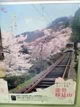 妙見の桜もきれいなもんですな