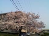 050408桜
