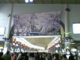 品川駅の桜