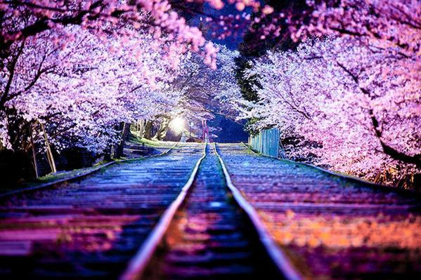 線路からの桜