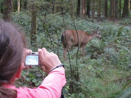 ハナちゃんと鹿