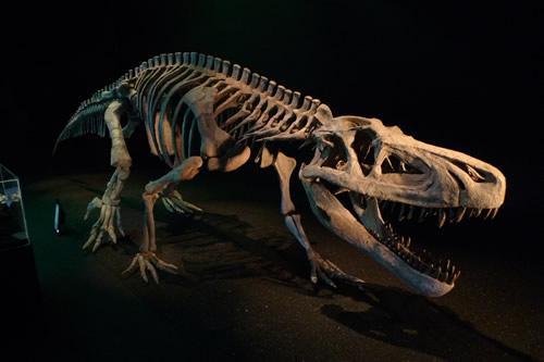 ザ・恐竜展