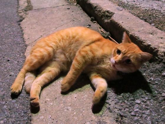 宮古島のネコ