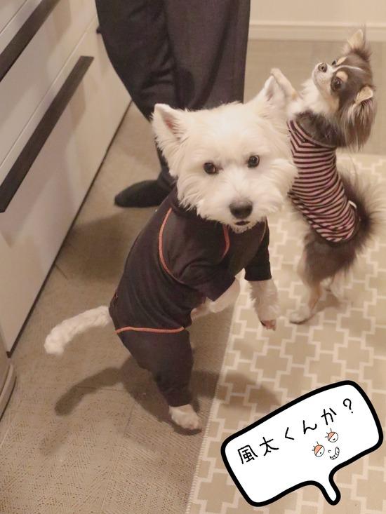【犬】おうちにいると、食べちゃうね。
