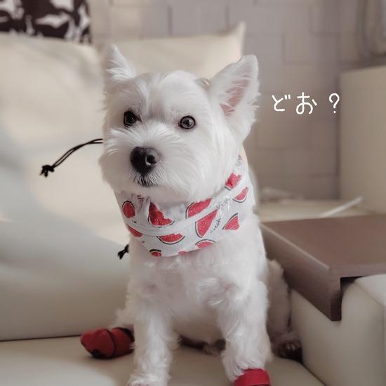 【犬グッズ】究極のクールネックを探し求めて