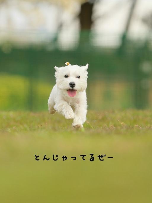 飛行犬 その③ 番外編 と、