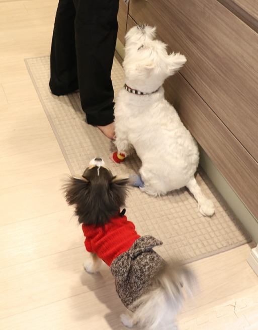 【犬】ごはんのローテがかわるぞ