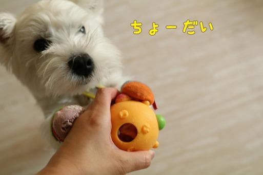 【知育おもちゃシリーズ②】期待の星