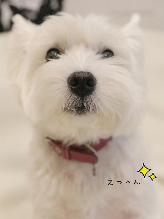 【犬】言葉のわかる犬