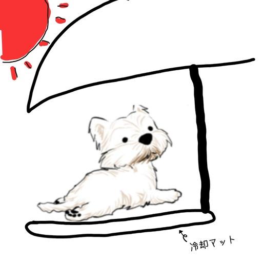 【ウエスティ】ベランダ好きの白犬の為の暑さ対策を考える
