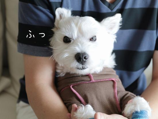 【犬】靴を履く犬の萌えポイント