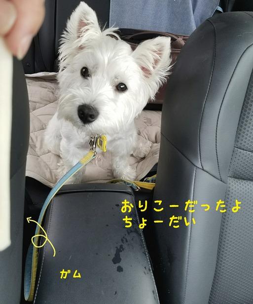 【犬】病院に行ってきたぞ~