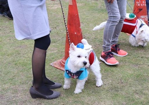 【ウエスティパーティ】白犬運送便の動画だよ~
