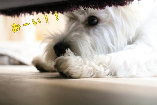 【犬】ソファーの下の君。