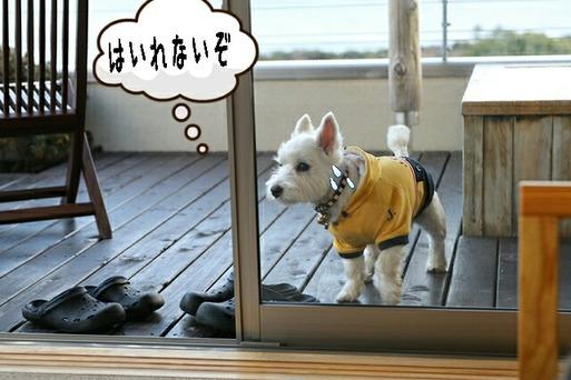【伊豆旅行】うちなんだか外なんだか