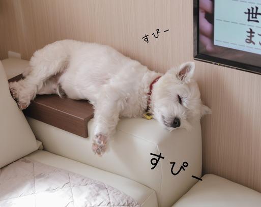 【ウエスティ】お気に入りのソファーの肘。その後