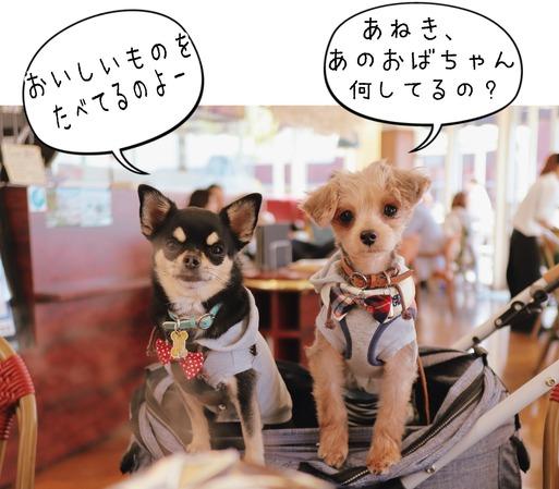 【ウエスティ】犬部 ランチ。と、ご質問のお返事。使ってるカメラ