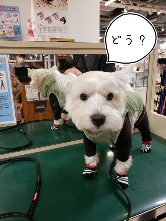 【犬】試着