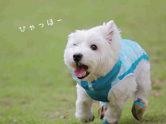 【犬】犬って、走る事が楽しいのか?