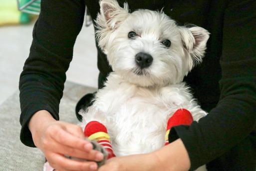 【犬】日課