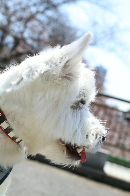 【犬】アレルギーの検査した結果・・・。