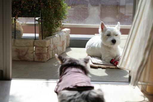 【犬】ひなたぼっことトレーニング