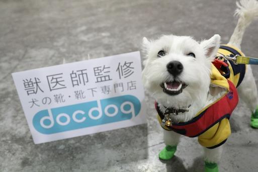 【犬靴】インターペットなう。docdogの靴はかせてもらったぞ
