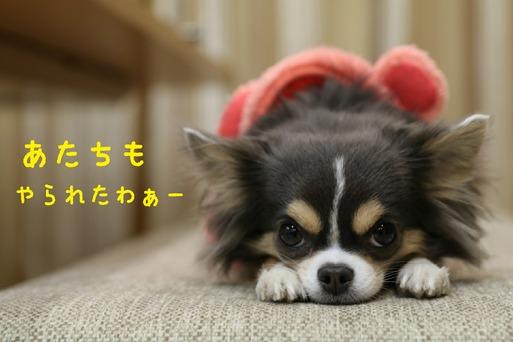 【犬】かっこよくなるはずの君